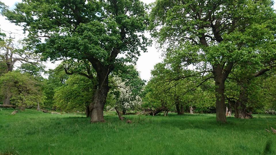environment-Oakwoodland